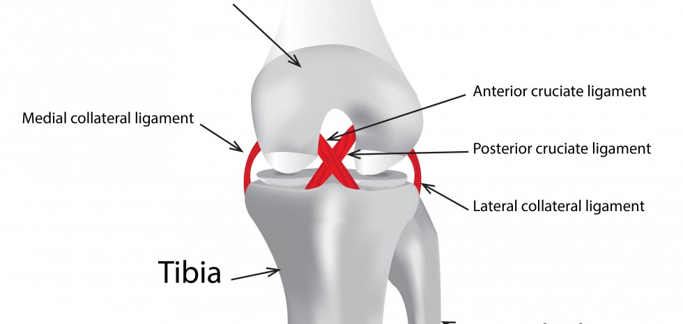 Knee pain reasons by best orthopedic doctor